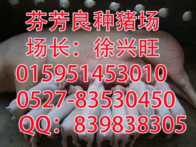 内蒙古梅山猪种猪价格_苏太猪批发价格_出售
