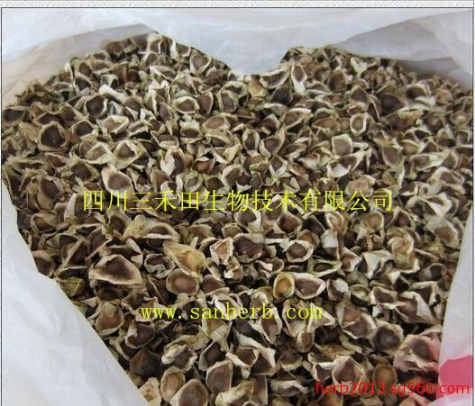 印度辣木籽,辣木生粉,moringa seed