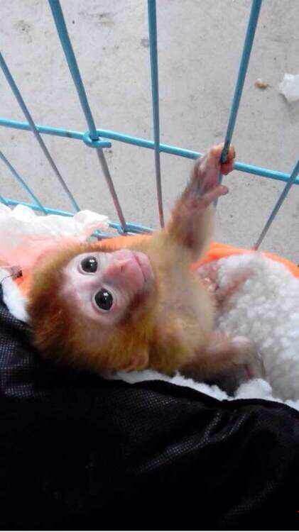 有人在网上卖猴子,国家二级保护动物.怎么举报?