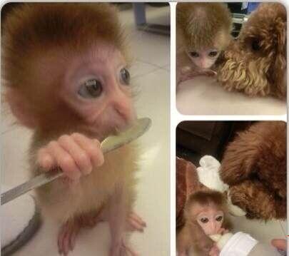 qq头像动物可爱萌猴