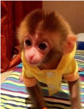 淮安哪里有宠物猴子卖