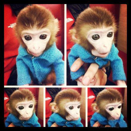 微信头像动物类 猴子