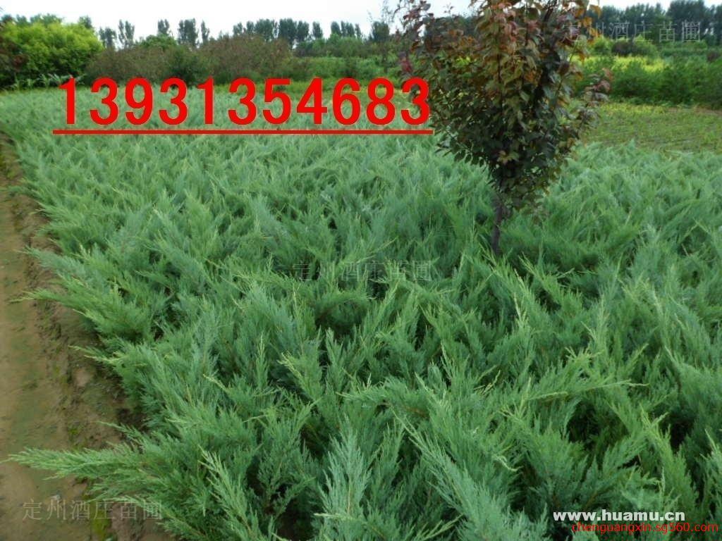 河北省定州酒庄苗木种植基地