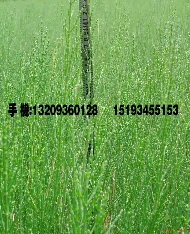 临泽县兴华农林开发有限公司